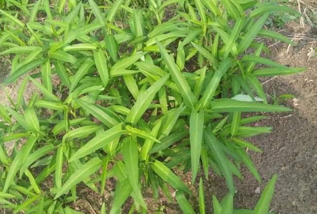 Advantages Of Monoculture Farming