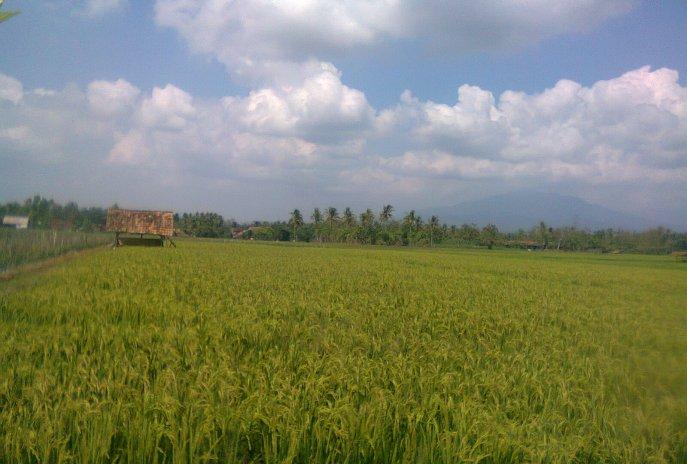The Advantages and Disadvantages of Contour Ditch Irrigation