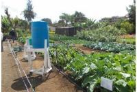 gravity drip irrigation system