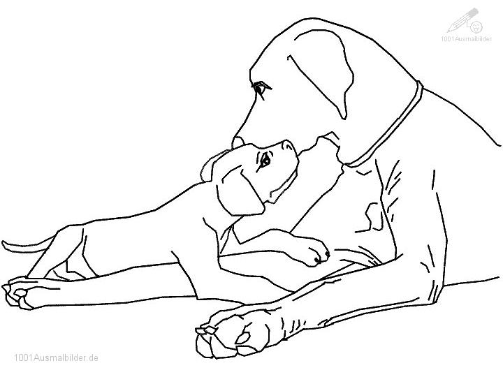Hond Kleurplaat Labrador Labrador Bilder Labrador