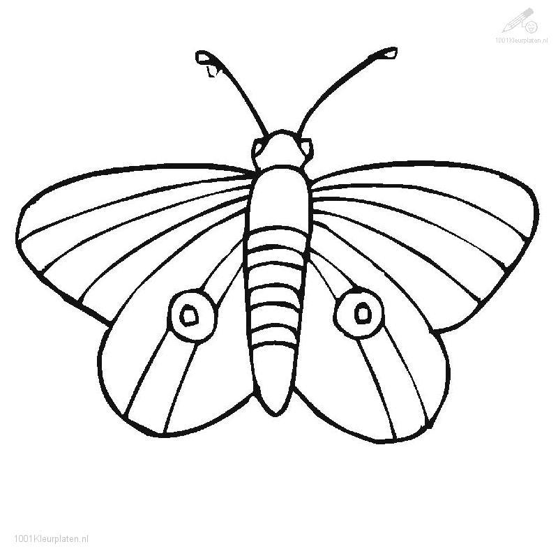 Luna Moth Coloring Page Coloring Pages