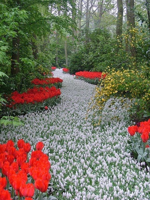 path of white flowers