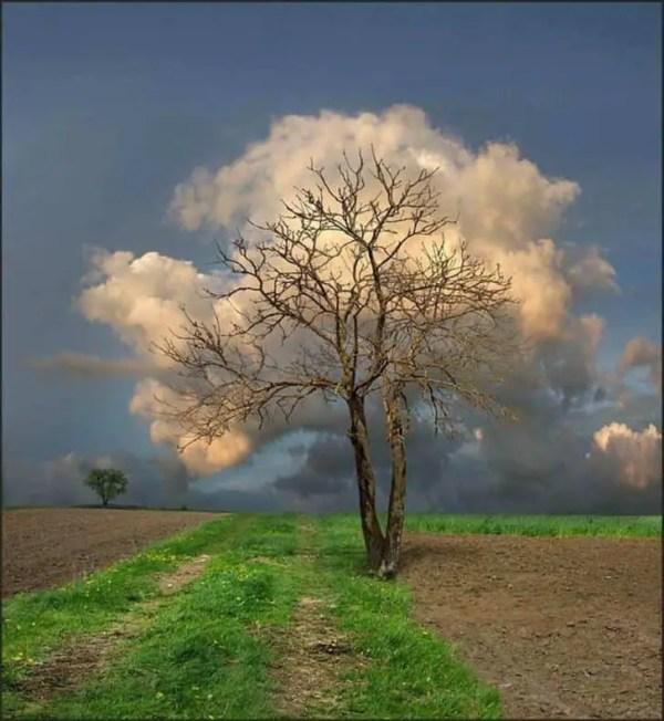 beautiful cloud tree landscape