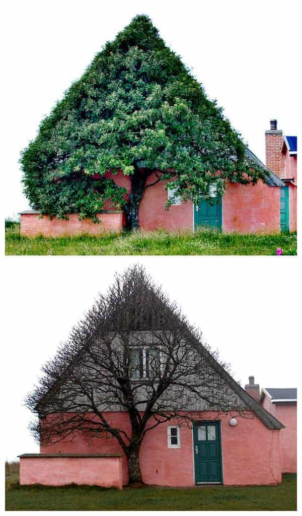 House Shaped Beautiful Tree to Shelter Itself from Wind