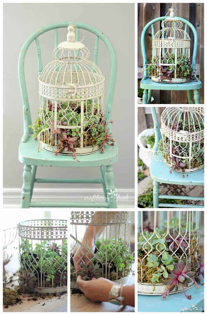Diy Transform A Birdcage Into Succulents Planter  1001