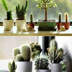 Repair Lawn Chairs Ace Adirondack Create Your Windowsill Cactus Collection • 1001 Gardens