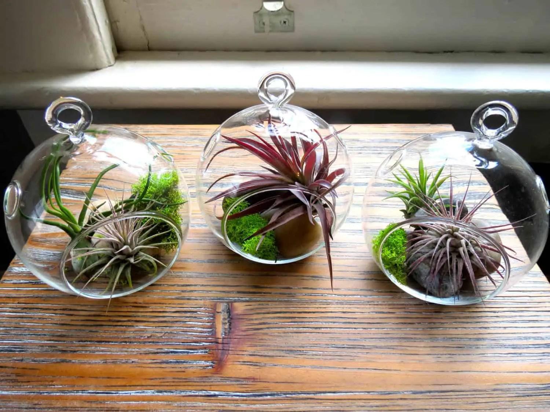 diy living room table decor paint color schemes kitchen hanging air plant terrariums • 1001 gardens