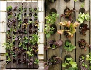 salad-vertical-garden-3