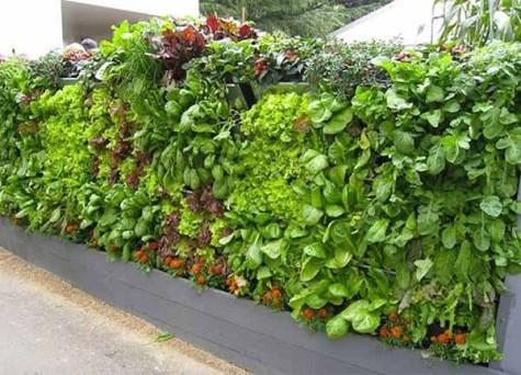 salad-vertical-garden