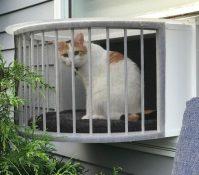 outdoor-catio-cats-3-640x563