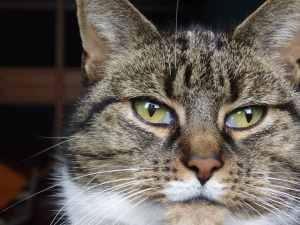 Kitten, 1001kattennamen