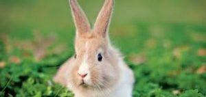 konijnennamen-konijnennaam