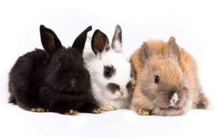 linkpartners konijnennamen