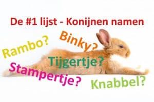 unieke konijnennamen, namen van konijnen, uniek konijn