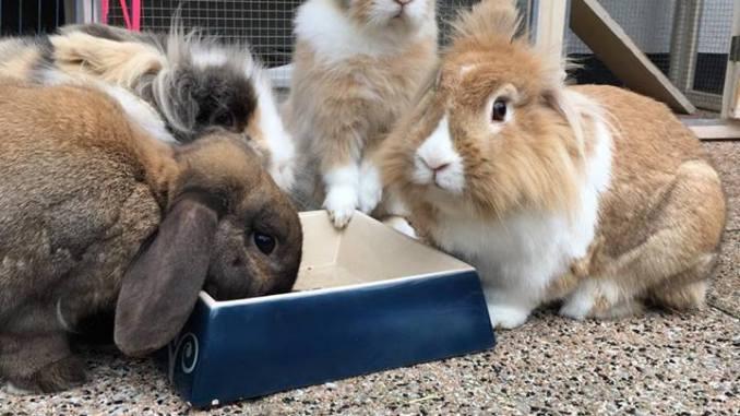 Konijnen zijn aan het eten! Wat eten konijnen?