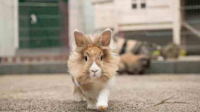 1001 konijnen namen - de top 10 konijnen namen voor mannetjes konijnen