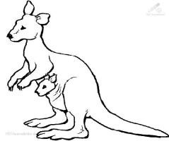 Kanguru Malvorlage   Coloring and Malvorlagan