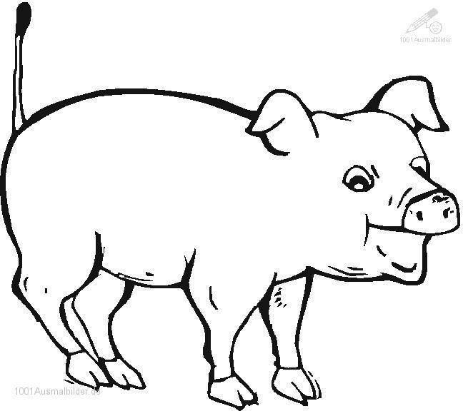 Schwein malvorlage kostenlos Coloring and Malvorlagan