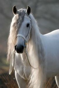 Wit paard met golvende witte manen