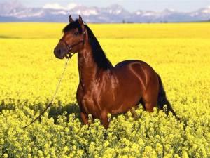 Bruin paard in veld met gele bloemen