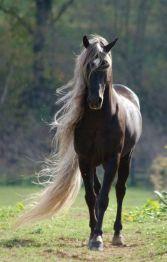 Prachtig mooi paard