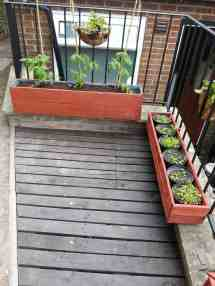 Tomatoes Pallet Planter 1001 Pallets