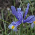昨日撮った庭の花190403