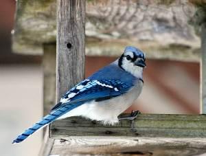 1001vogelnamen - Zijn naam is Skippy (letter S)