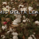 Dynamic Delta Leaders: Education is the Key