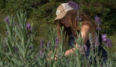 New Wave of Lavender Farmers Hope to Revive Barren Stripmines into Fields of Purple