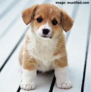 cute-dog-2