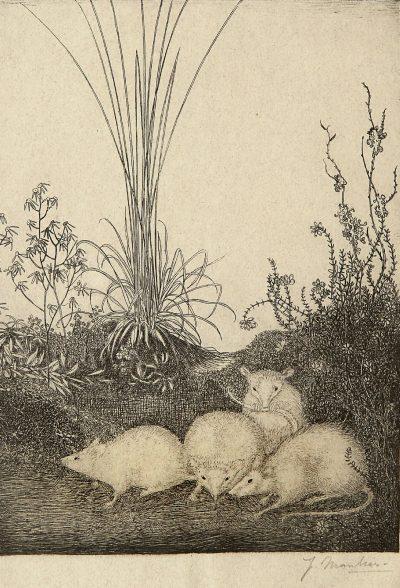 Vier muizen,ets op papier - 19,5 x 14,5 cm, 1916