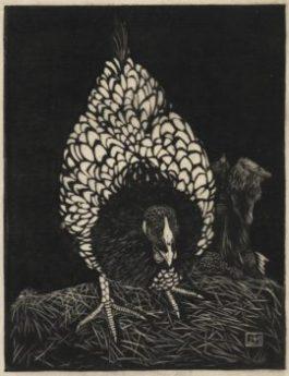Zilverwyandotte, houtsnede 1917 18,9 x 14,6
