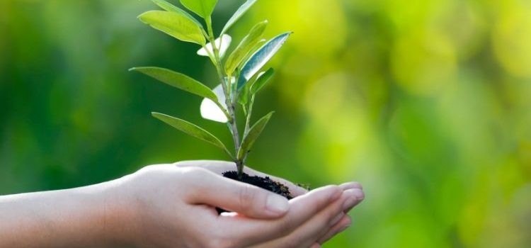 100th Seed - Stewardship
