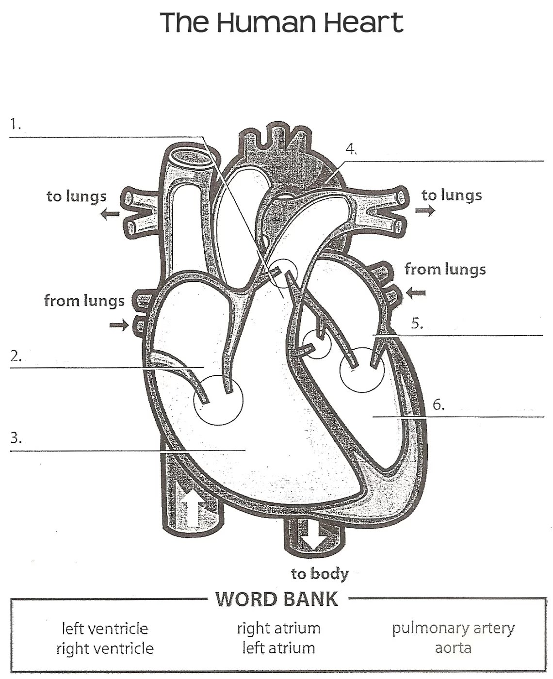 Printable Heart Diagram