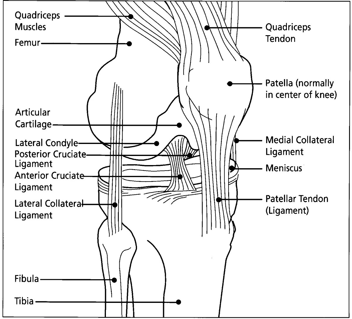 Diagrams Of Knee