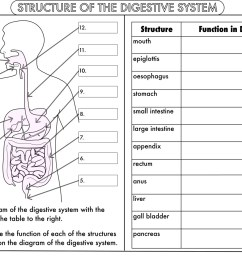Digestive System Worksheet Grade 6   Printable Worksheets and Activities  for Teachers [ 1127 x 1600 Pixel ]