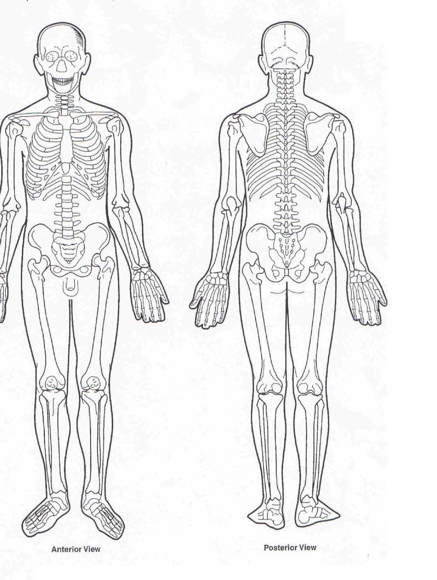 Human Muscles Diagram : human-leg-muscles-diagram