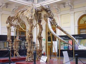 Museo di Storia Naturale Giacomo Doria  101giteinliguriait