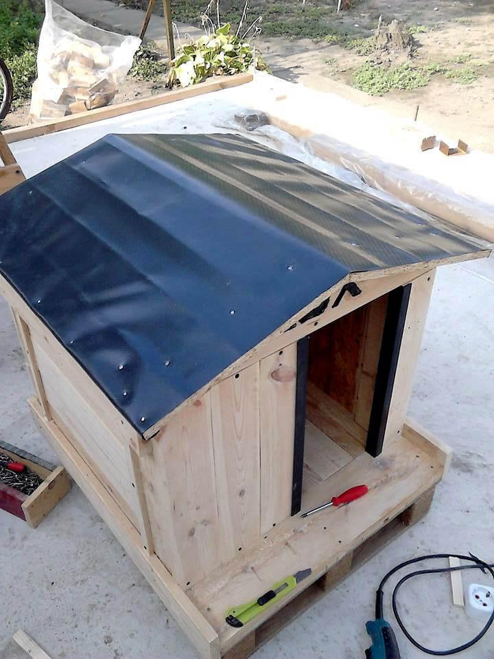 Build Dog House