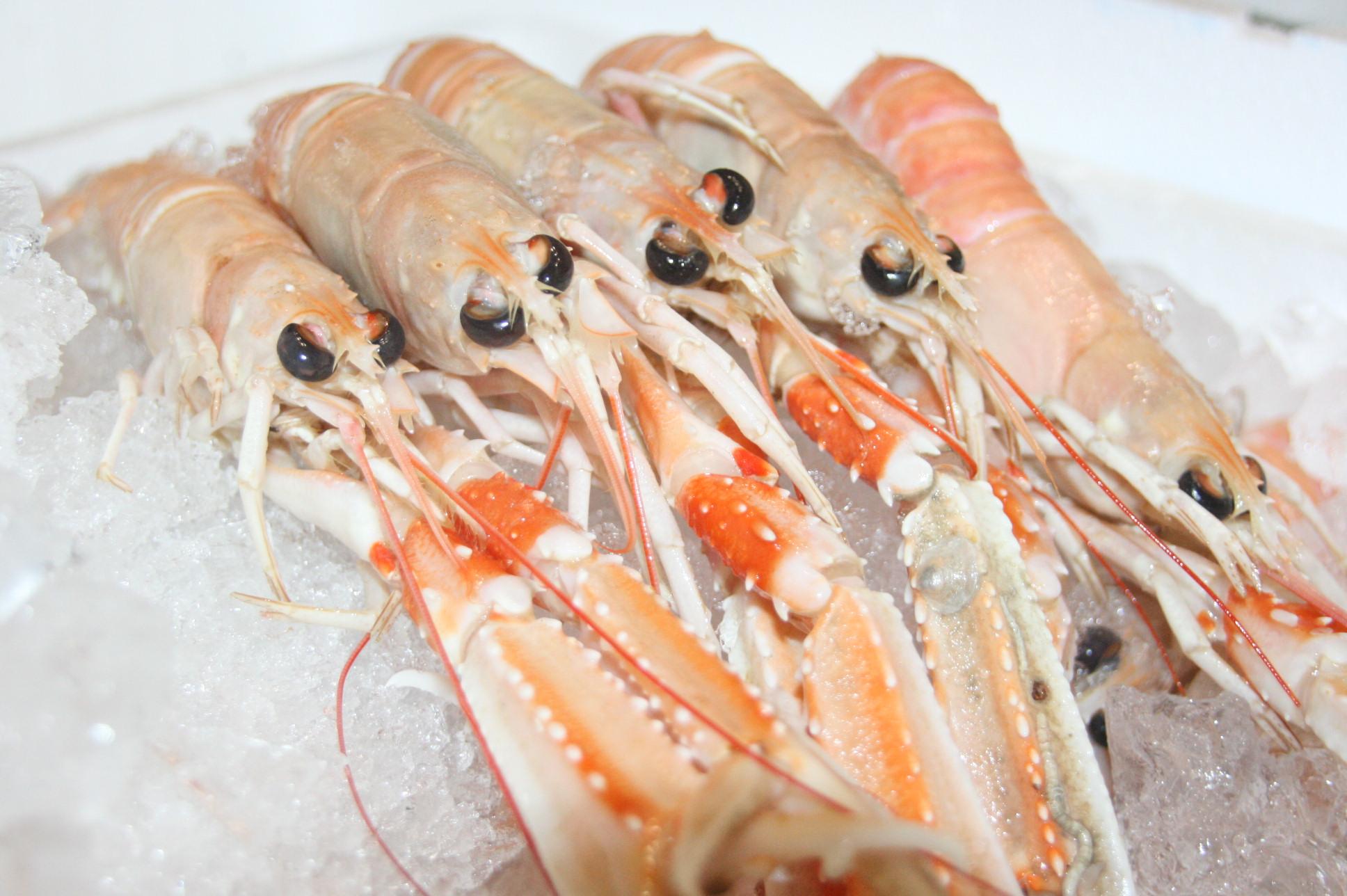 龍蝦Langoustine Dublin bay prawn 101購物商城101網購美食 團購 網購 網購美食 團購美食 日本進口食材-進口食材 烤 ...