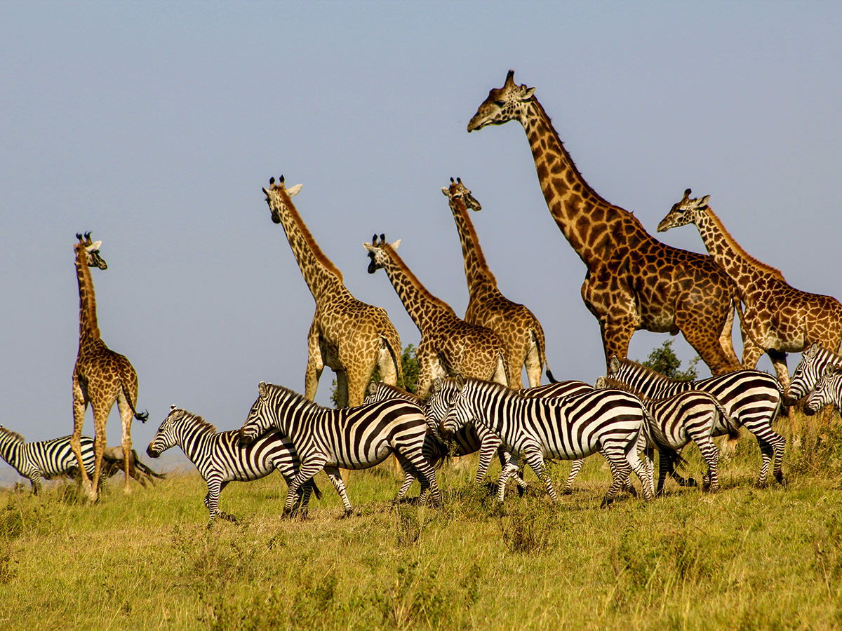 Best Of Kenya And Tanzania Safari Africa