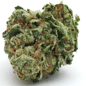 Hustler Kush Marijuana Strain