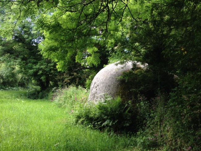 Huge granite boulder surrounded by lawn and overhung by an ash tree. St Michael's Way hike, Cornwall, UK.
