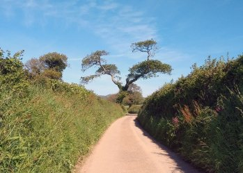 Hana's Hike to Mevagissesy 2019. View down a typical narrow Cornish lane with high hedges either side and a straggly looking oak tree at the end against a bright blue sky.