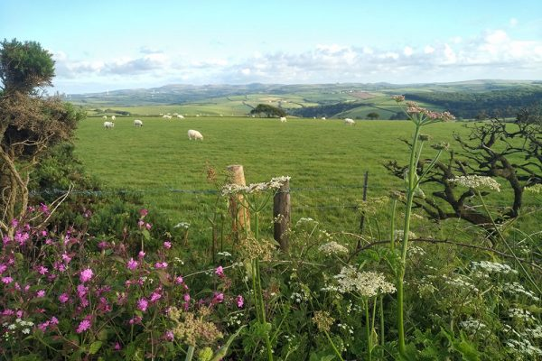 View of countryside across St Breock Downs, central Cornwall