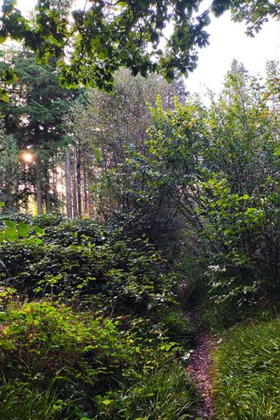The morning after a wild camp in the woods. View down a path in a mixed woodland in the early morning sunlight.