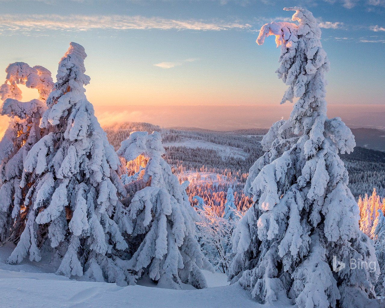 Fashion Wallpaper Iphone X Germany Bavaria Winter Forest Morning 2018 Bing Preview