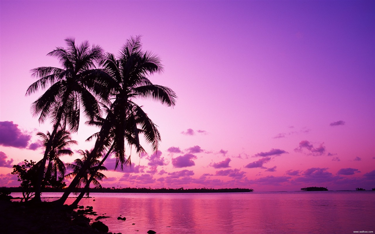 Forest Animal Wallpaper Tahitian Sunset Under The Palm Wallpaper Preview