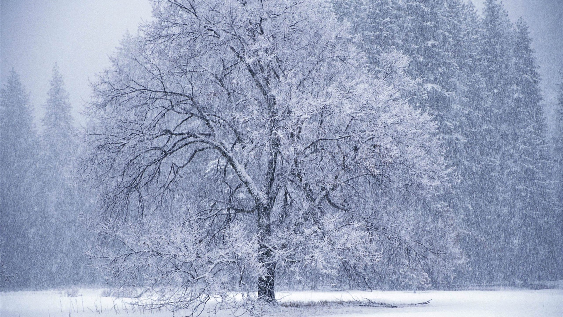 Beautiful Snow Falling Wallpapers Snow Falling Winter Snow Scenes Wallpaper Preview